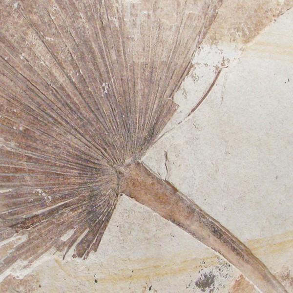 Fossil Palm Sculpture 02_051209100