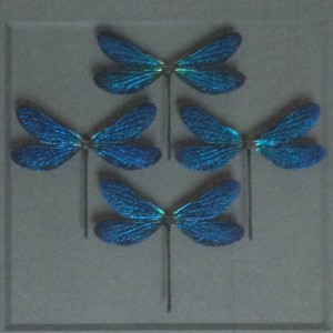 Azure Damselfly Diamond Grouping Framed Pheromone