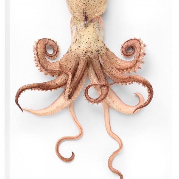 Preserved Squid Framed Pheromone