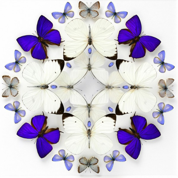 20 x 20 Inflorescence Prism Alternate