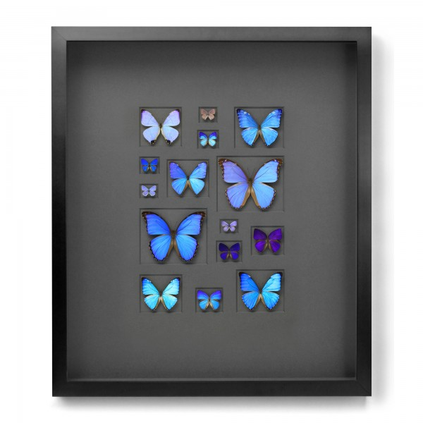 Cerulean Butterfly Mosaic Framed Pheromone