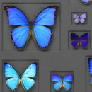 Cerulean Butterfly Mosaic Framed Pheromone 2