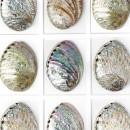 Pastel Abalone Mosaic Framed Pheromone 2