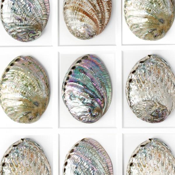 Pastel Abalone Mosaic Framed Pheromone