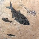 Fossil Collector Mural 02_Q030730004cm 2