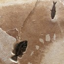 Fossil Sculpture 02_1112085005 2