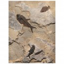 Fossil Collector Mural Q110720006