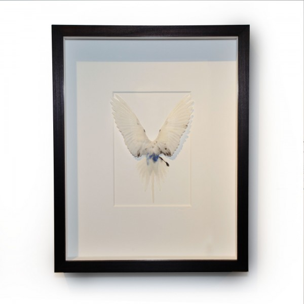 14 x 18 Shell Parakeet Bird - White with blue accents
