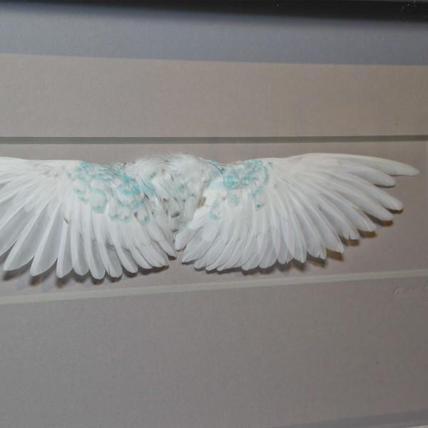 20 x 8 Wings - White