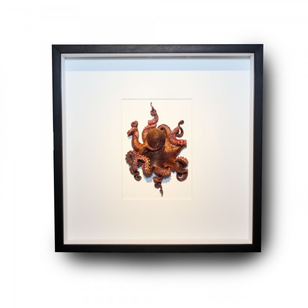 20 x 20 Preserved Octopus