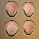 11 x 14 Moon Scallops 2