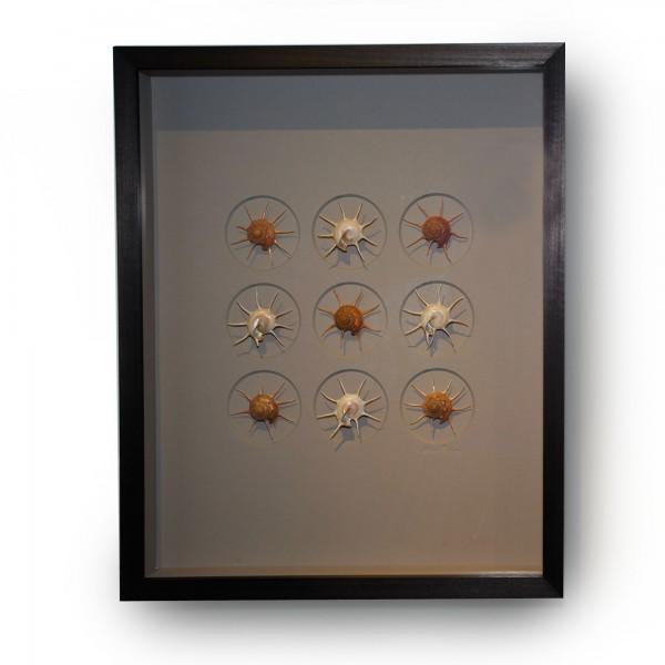 16 x 20 Gilded Starshells Alternate