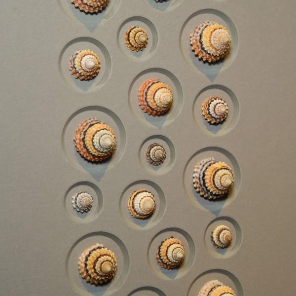 11 x 14 Candy Shells
