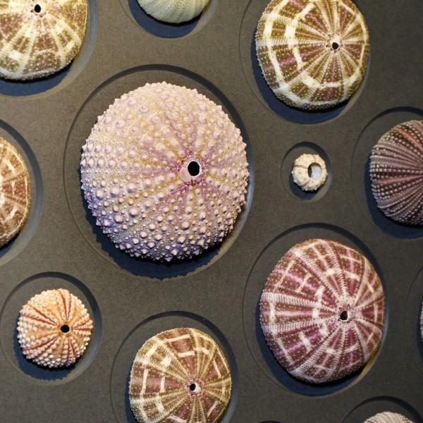 32 x 40 Urchin Spheres