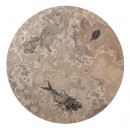 Fossil Round Table 02_Q060809005