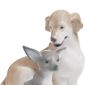 Breed of Dogs