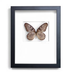 11x14 Champagne Ricepaper Butterfly