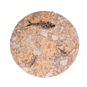 Fossil Coffee Table (Round) 150331001tc