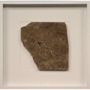 Fossil Shadow Box 171004628