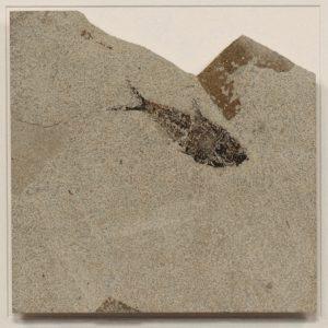 Fossil Shadow Box 171004629