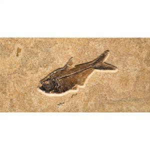 Fossil Tile (Combination) DL48_S212