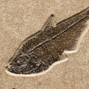 Fossil Tile (Combination) DL88_S224