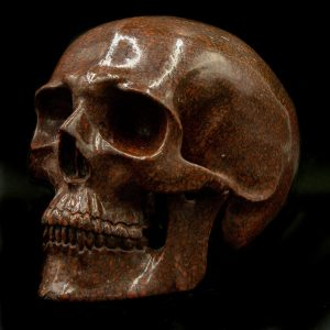 Dino Bone Brown Skull